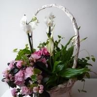 Szülőköszöntő virágkosár 22
